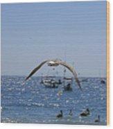 A Seagulll In-flight At Playa Manzanillo Wood Print