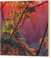 A Season's  Sunset Dusting Wood Print