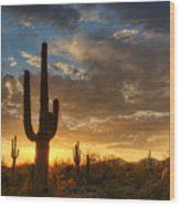 A Serene Sunset In The Sonoran Desert  Wood Print