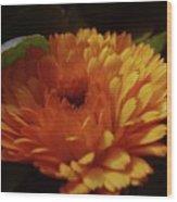 A Shadowed Blossom  Wood Print