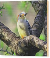 A Shady Woodland Bird Red-bellied Woodpecker Wood Print