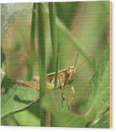 A Shy Grasshopper Wood Print