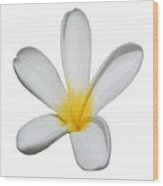 A Single Plumeria Flower Isolated Wood Print