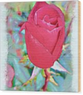 A Single Rose In October Wood Print