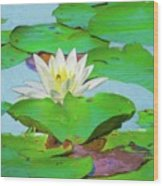 A Single Water Lily Blossom Wood Print