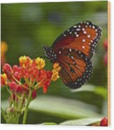 A Sip Of Milkweed Nectar Wood Print