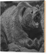 A Slightly Upset Grizzly Bear Wood Print