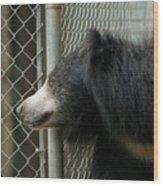 A Sloth Bear Melursus Ursinusat Wood Print by Joel Sartore
