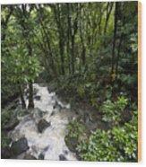 A Small River Flows Through A Dense Wood Print