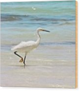 A Snowy Egret (egretta Thula) At Mahoe Wood Print