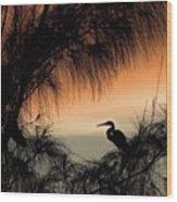 A Snowy Egret (egretta Thula) Settling Wood Print