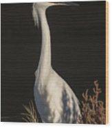 A Snowy Egret Portrait Wood Print