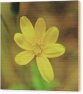 A Soft Yellow Flower  Wood Print