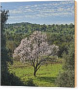 A Solitary Almond Tree Wood Print