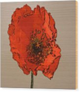 A Solitary Poppy Wood Print