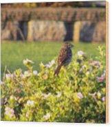 A Sparrow Surveys Wood Print