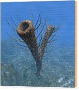 A Species Of Pirania, A Primitive Wood Print