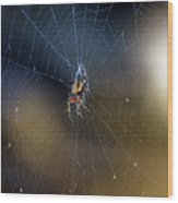 A Spider And Her Web Wood Print