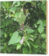 A Spider Web Wood Print