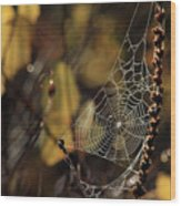 A Spiders Creation Wood Print