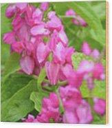 A Splash Of Pink Wood Print