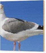 A Splendid Seagull Wood Print