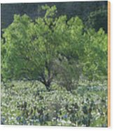 A Spring Scene In Texas. Wood Print