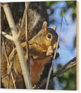 A Squirrel's Feist Wood Print