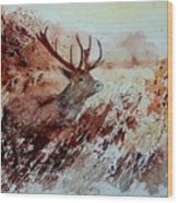 A Stag Wood Print