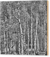 A Stand Of Aspen Trees In Black And White Wood Print