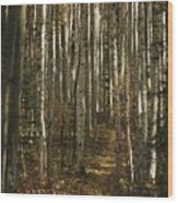 A Stand Of Birch Trees Show Wood Print