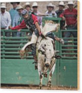 A Strong Bull Ride Wood Print