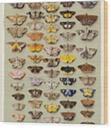 A Study Of Moths Characteristic Of Indo Wood Print