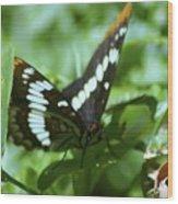A Summer Butterfly  Wood Print