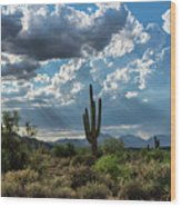 A Summer Day In The Sonoran  Wood Print