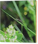A Summer Of Dragonfly Kisses Wood Print