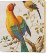 A Sun Conure Parrot  Wood Print