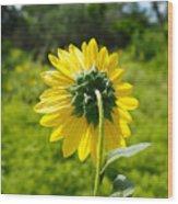 A Sunflower's Backside Wood Print