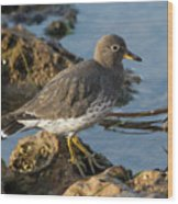 A Surfbird At The Tidepools Wood Print