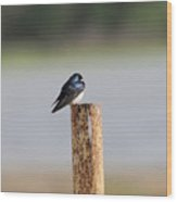 A Swallow On A Pole Wood Print