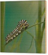 A Swallowtail Butterfly Caterpillar Wood Print