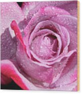 A Sweet Sweet Rose Wood Print