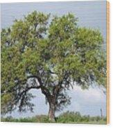 A Tale Of One Tree Wood Print