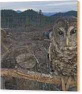 A Threatened Northern Spotted Owl Wood Print
