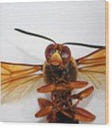 A Thug Bug Wood Print