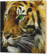 A Tiger's Stare Wood Print by Ricky Barnard