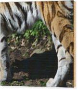 A Tigers Stride Wood Print