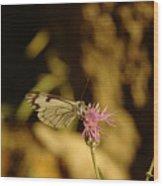 A Tilting Butterfly  Wood Print