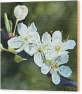 A Touch Of Innocence Wood Print by Bobbi Price