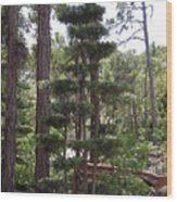 A Towering Tree Wood Print